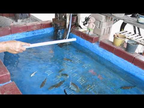 ปลาเสือพ่นน้ำ