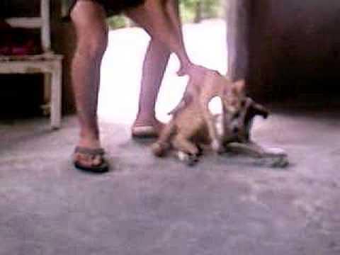 Cruzamento de animais