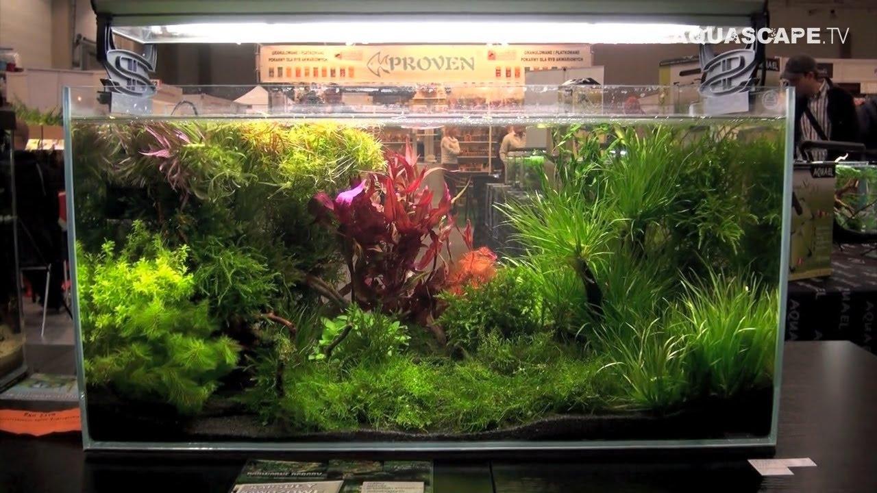 Aquascaping - Aquarium Ideas from PetFair 2013, Lodz, Poland, pt.10 ...