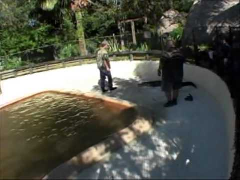 "MART from ""GATOR BOYS"" Training session with GUS ONEBEAR - YouTube"