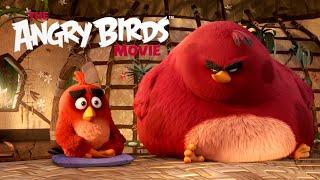 Angry Birds - ukážka z filmu