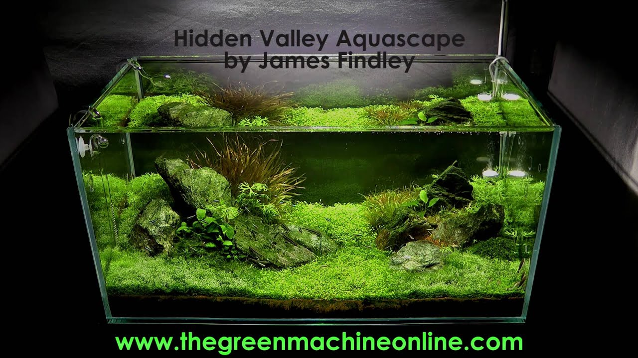 Green Machine Aquascape 28 Images James Findley