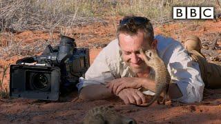Planet Earth: Magic Meerkat Moments