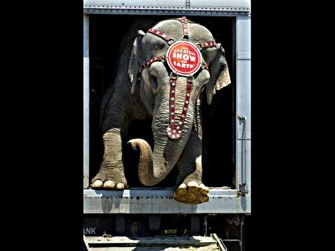 Ringling Bros. Circus Animal Cruelty and Confinement- LIFE IN A CAGE & CHAINS