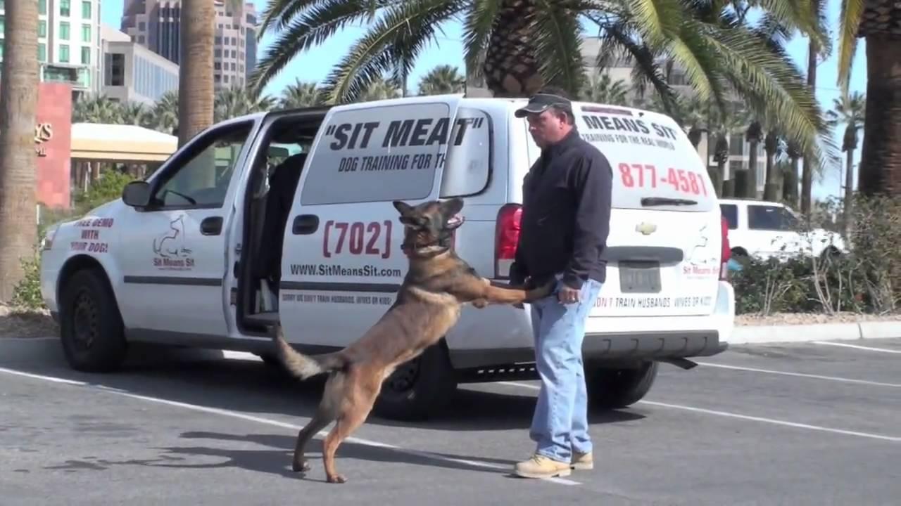 Dog Training In Las Vegas Nevada