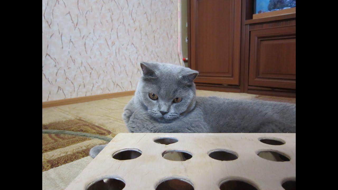 Игрушку для кота своими руками youtube
