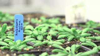 Plant Protection and Production: centre of excellence for translational plant science