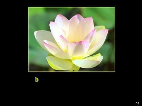 (2/12) Tụng Kinh Phổ Môn-Chú Đại Bi-(Âm)-Thầy Thích Trí Thoát tụng