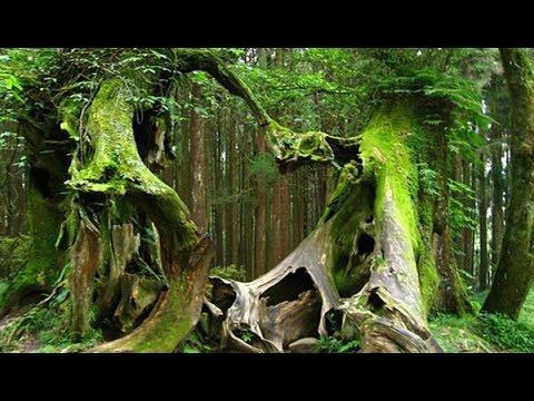 Bí ẩn khu rừng