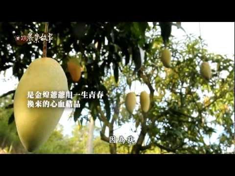 高雄農業故事館-金煌芒果(影片長度:15分9秒)