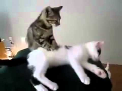 Funny to her Massage a Giving animal videos MOM Kitty  P