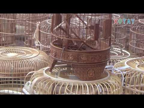 Phiên chợ chim Hà Đông (Hà Nội) bán chim, chó, mèo, gà, svc