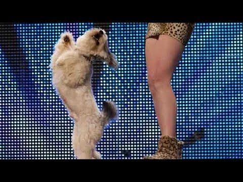 Ashleigh and Pudsey ( le chien) HD - Britains got talent 2012