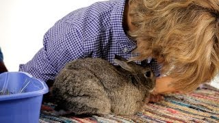 How To Get Rid Of Your Rabbit's Odor Pet Rabbits
