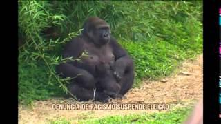 M�rcio Lacerda diz que pol�mica sobre nome de gorila �