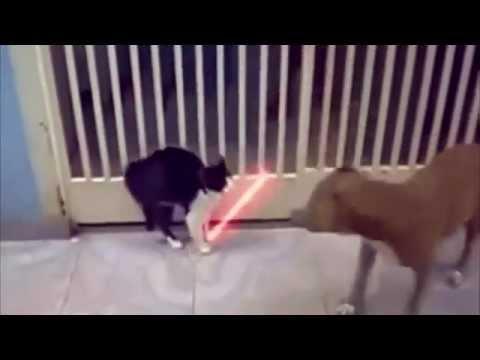 videos de risa, Recopilación de gatos