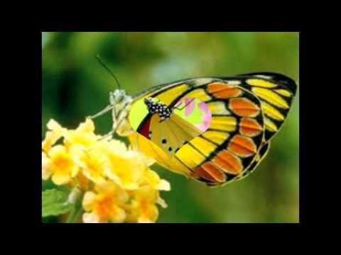 Hình ảnh về loài bướm