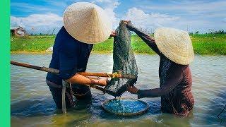 This river is FULL of food! (Hến trộn + Bánh bèo)