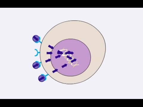 How cancers grow - getting the wrong message - Cancer Research UK