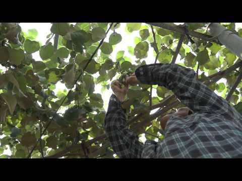 濃農的安全感(影片長度:5分)
