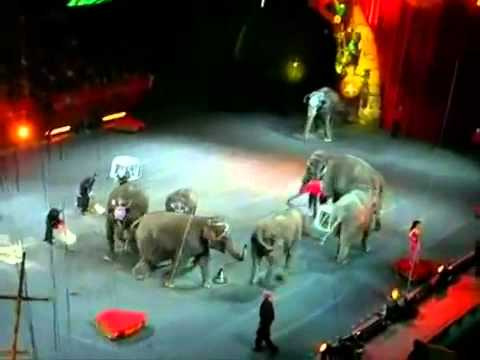 Xiếc voi, xiếc trăn, dịch vụ xiếc, cung cấp nhóm xiếc - 0914885886