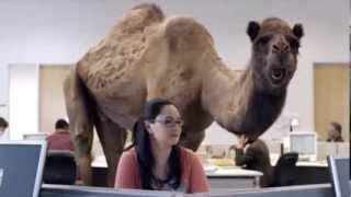 Geico Hump Day Commercial Parody Edit