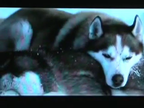 Movie About Dogs Left In Antarctica