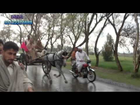 ghourghushti horse race 23/3/2013 part 2