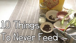10 Things Never To Feed To Your Rabbit