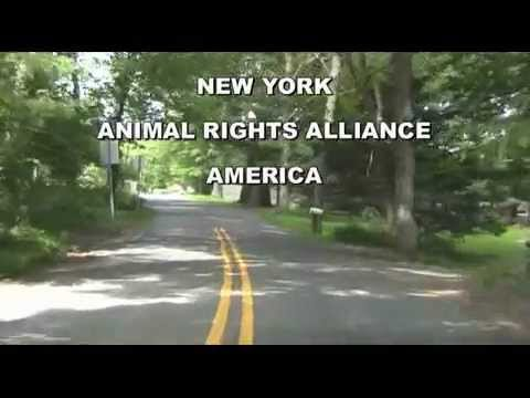 Malibu Dude Ranch Protest Rodeo, New York Animal Rights Alliance America 7/2/11 Kay Riviello