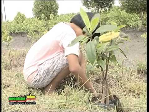 57 7 ภูมิปัญญาแผ่นดิน วนเกษตรชุมชน
