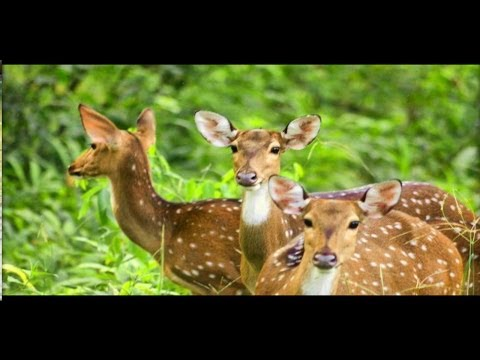 Wayanad Wildlife Safari - A short film on the Wildlife of Wayanad Forest India