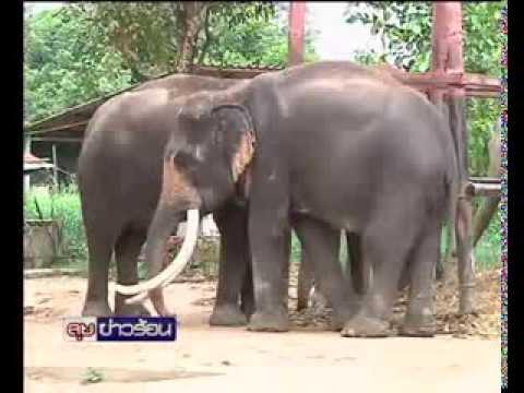 26-9-56 ลุยข่าว23.00 คนช้างคัดค้าน พรบ ช้าง