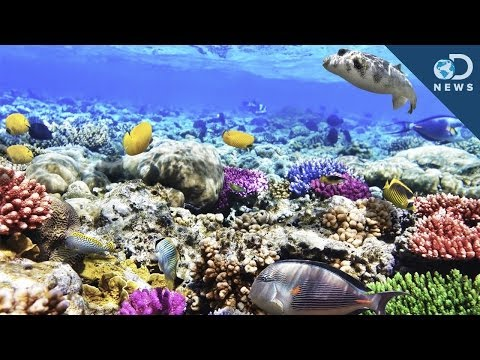 What Are Coral Reefs And What's Their Purpose?