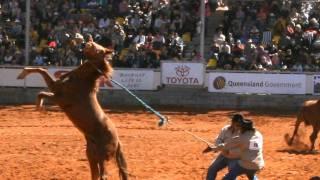 El toro espina (audio) 8 Segundos