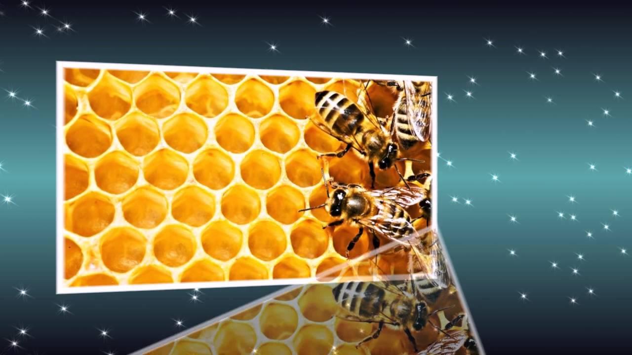 День пчеловода поздравление 66
