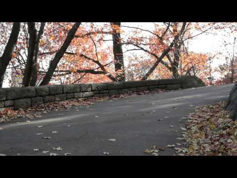 Wheelbase Review: Abec 11