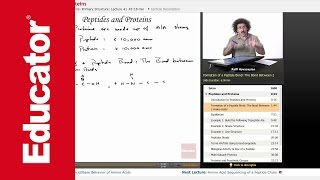 """""""Peptides & Proteins""""   Biochemistry with Educator.com"""
