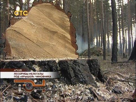 Лесорубы-нелегалы под «крышей» чиновника