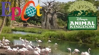 Disneyworld- Epcot & Animal Kingdom-Walkthrough w/commentary