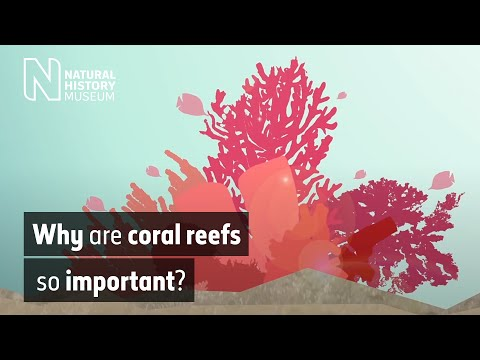 Why are coral reefs so important?