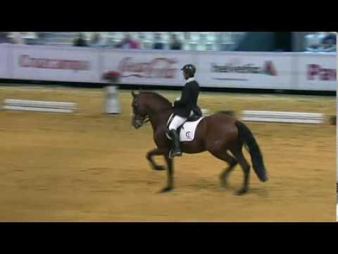 Venta de caballos PRE - Caballos en venta Caballos Andaluces Caballos Españoles Videos