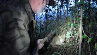 Modern Trapping Part 17 Coyote In A Fence Snare