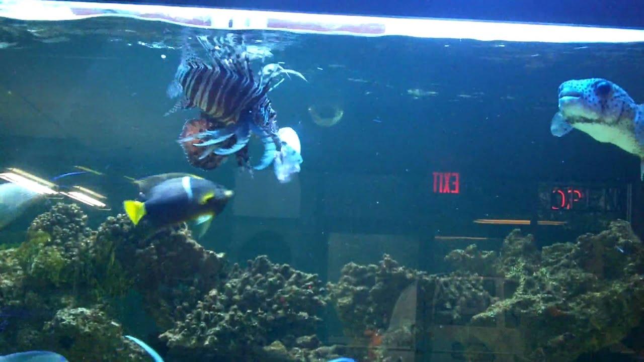 Shark Feeding Frenzy King Aquarium Youtube