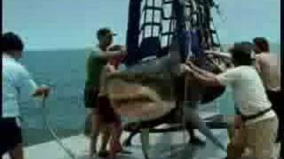 Shark Eat Man