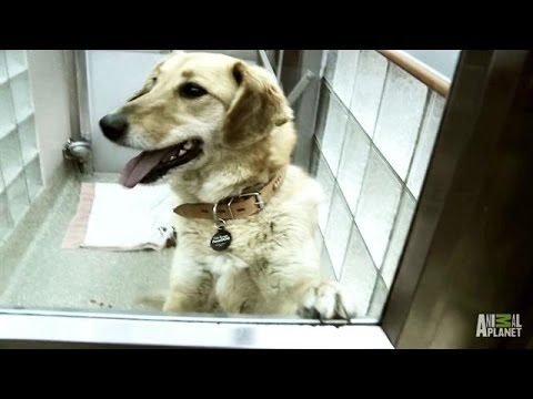 Dogs from Sochi Arrive in Washington, D.C. | APL!VE