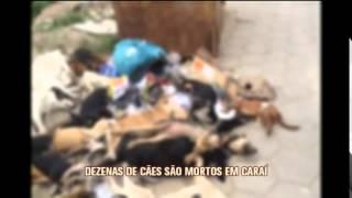 Pol�cia Civil investiga exterm�nio de c�es em Cara�, no Vale do Jequitinhonha