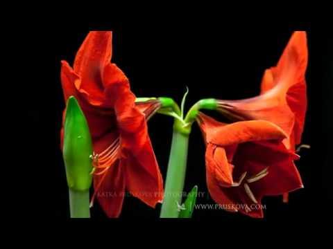 اجمل الازهار الطبيعية