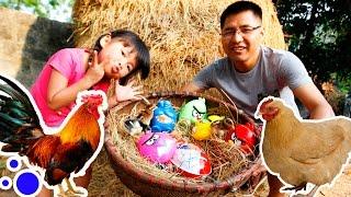 BÉ BÚN CHƠI TRÒ CHƠI GÀ ĐẺ TRỨNG – BÓC TRỨNG NGƯỜI NHỆN vs BÓC TRỨNG ANGRY BIRDS | CreativeKids