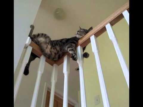 najdłuszszy film o kotach